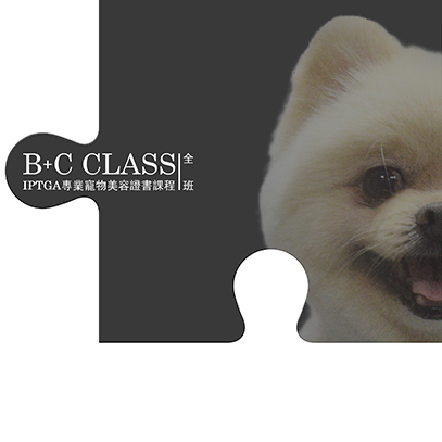B+C_class_B_class_iptga_dog_gromming_course