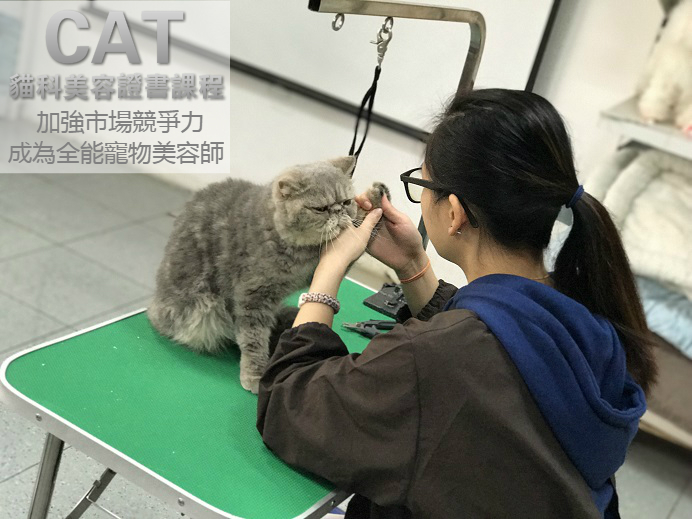 cat-grooming-certificate-course
