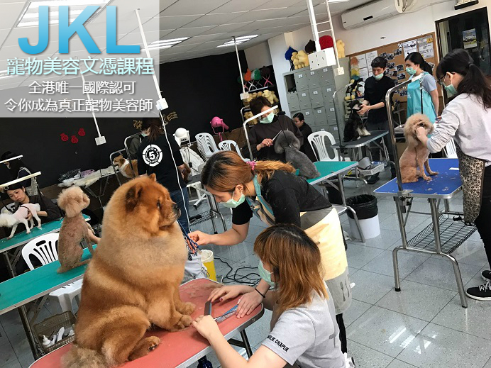 jkl-grooming-diploma-course